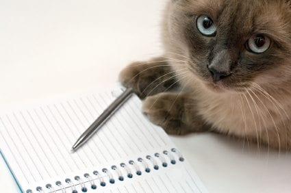 pam johnson-bennett cat behaviorist