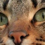 cat whisperer