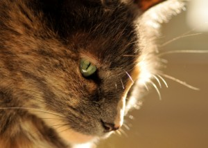 cat behaviorist