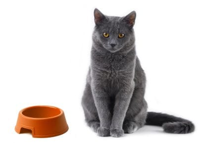 cat and bowl