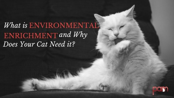 what-is-environmental-enrichment-and-why-does-your-cat-need-it