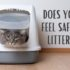 does your cat feel safe in the litter box