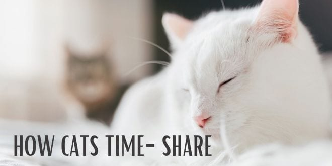 how cats time-share