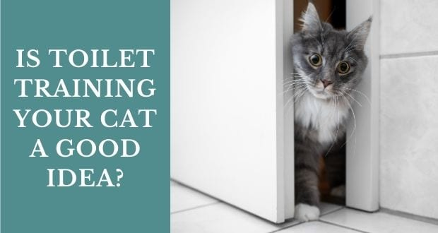 is toilet training your cat a good idea