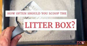 how often should you scoop the litter box?