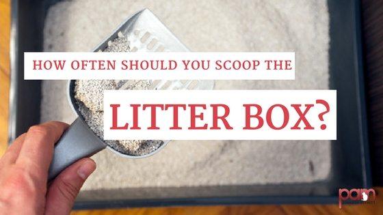 How often should you scoop the