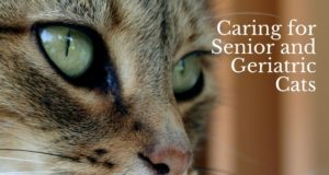 caring for senior and geriatric cats