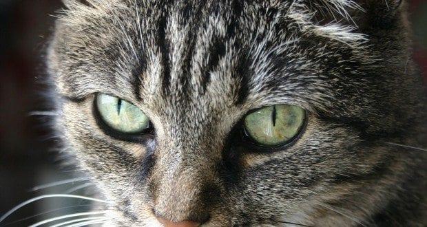top rated grain free cat food