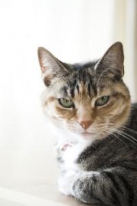 Miraculous Caring For Senior Cats Cat Behavior Associates Short Hairstyles For Black Women Fulllsitofus