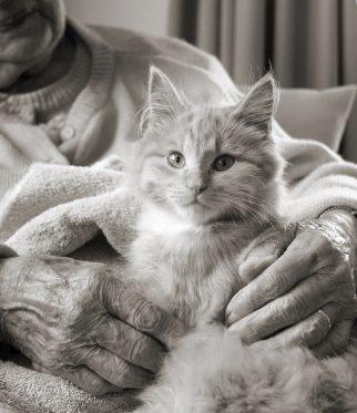 cat and senior