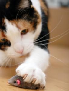 senile cat