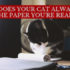 why does your cat always sit on the paper you're reading