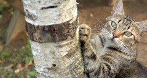 scratching a tree