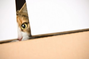One eye of cat peers through crack in box