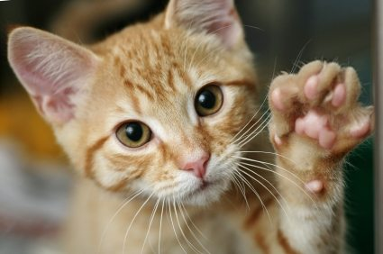 iStock 000008162989XSmall1 Teach Your Kitten to Enjoy Being Touched