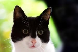 iStock 000009472241XSmall1 300x199 Why Cats Spray