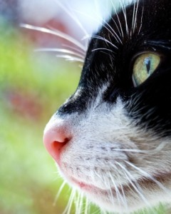 Cats have scent glands on their paws pads, their cheeks, on their head and ...