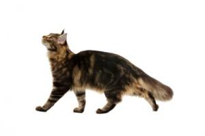 Cat Behaviour Training