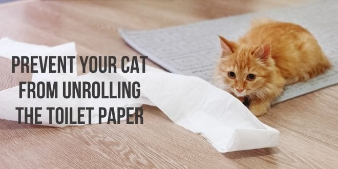 prevent your cat from unrolling the toilet paper