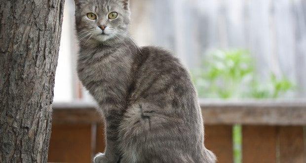 Furniture Scratching Cat Behavior Associates