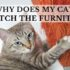 why does my cat scratch the furniture