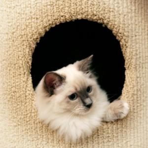 understanding fear in cats