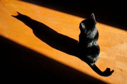 cat with shadow