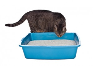 moving the litter box