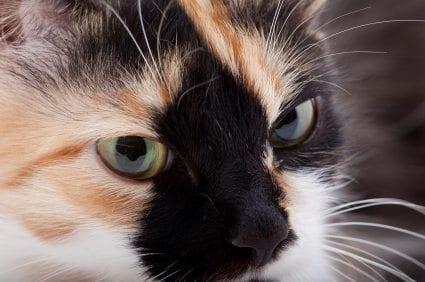 cat behavior problem