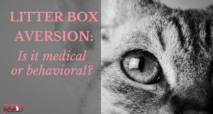 litter box aversion: is it medical or behavioral