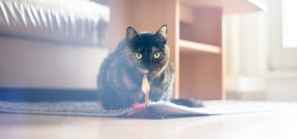 cat playing with a toy