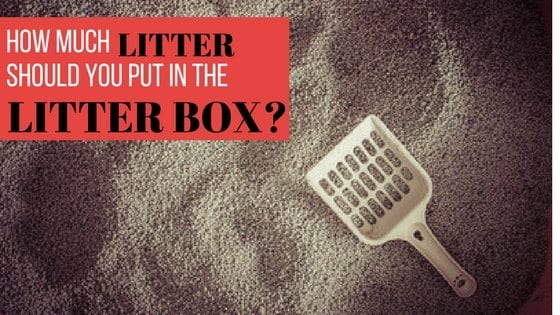 how much litter to put in the litter box