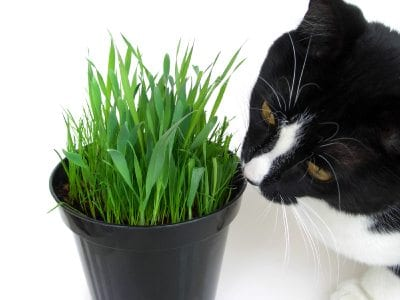 Video Of Cat Chewing Pot Plant