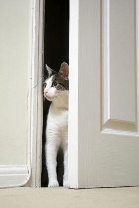 ... indoor cat behavior problems & Cat Behavior | Door Darting : What to Do? Pezcame.Com