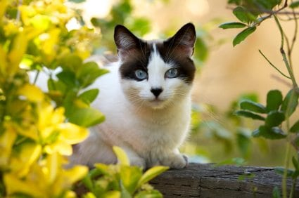 spaying and neutering your cat