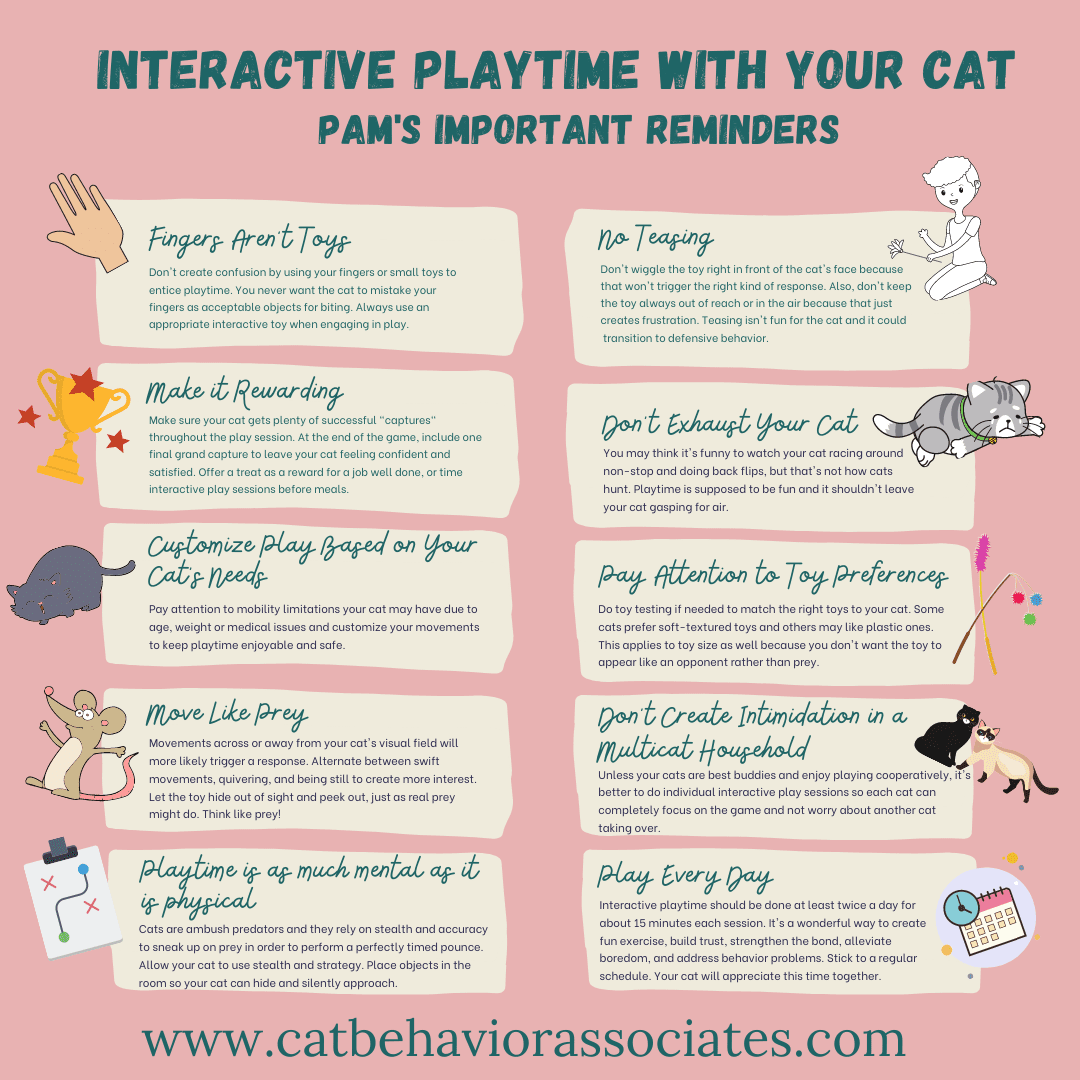 interactive playtime with your cat