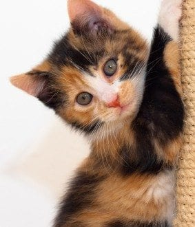 kitten at post