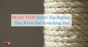 worn-out-scratching-post