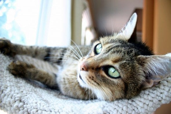 Cat Litter To Absorb Pet Urine In Carpet