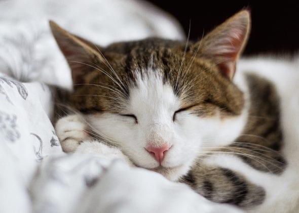 kittens dream