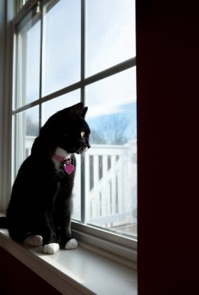 black and white cat at window Separation Anxiety in Cats
