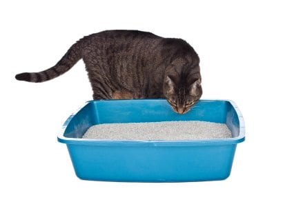 iStock 000010821270XSmall1 Litter Box Problems Due to Location Aversion