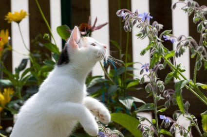 How to keep unwanted cats out of your yard - How to keep intruders out of your garden ...