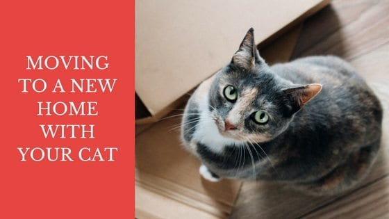 how to get rid of cats from gardens