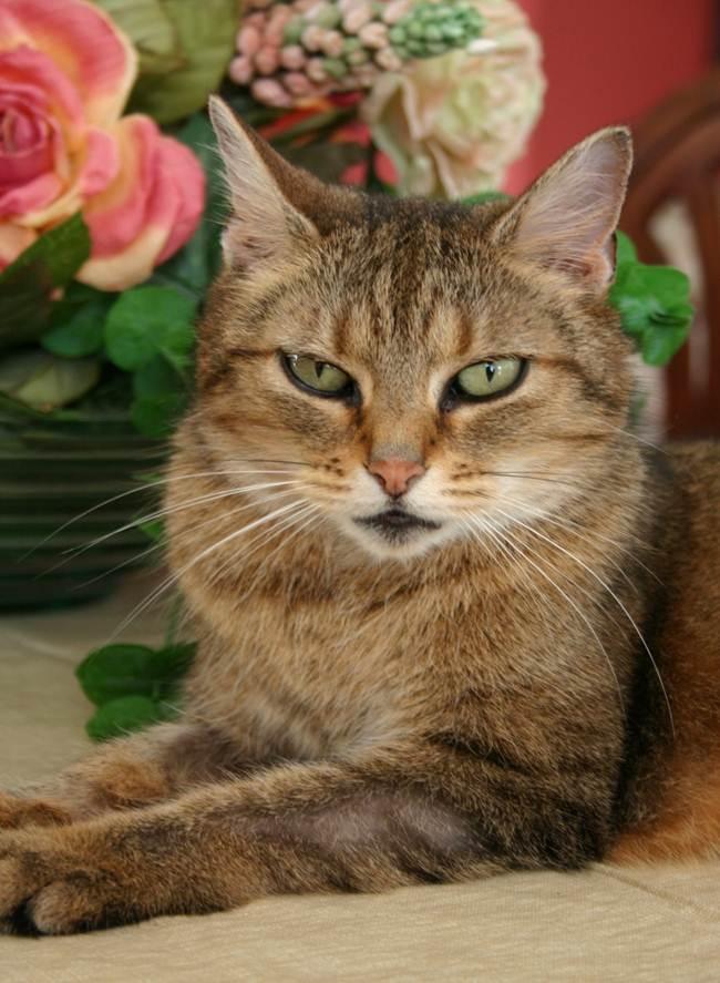 Beatrice Cat Kisses