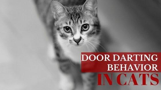 Stop cat meowing at bedroom door