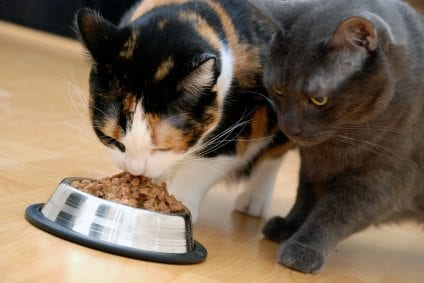 Image result for feed cats