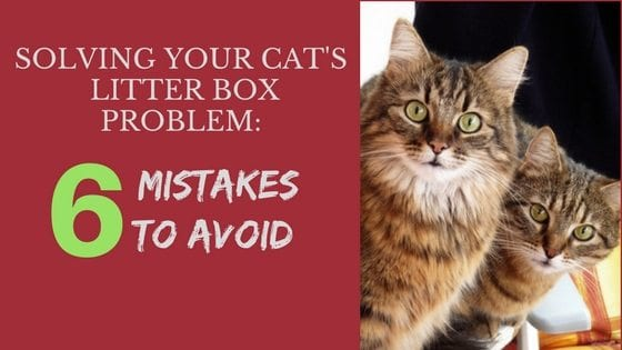 solving your cat's litter box problem
