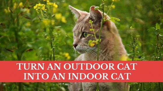 Cat Training Turn An Outdoor Cat Into An Indoor Cat