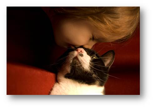 Picture8 How Cats Show Affection